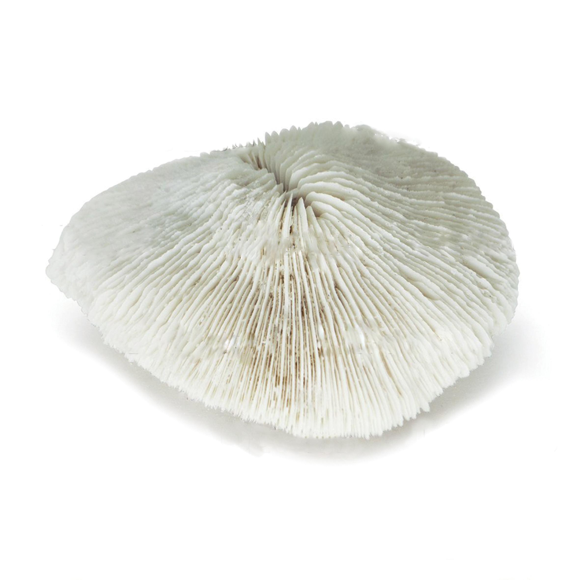UDeco Disk Coral