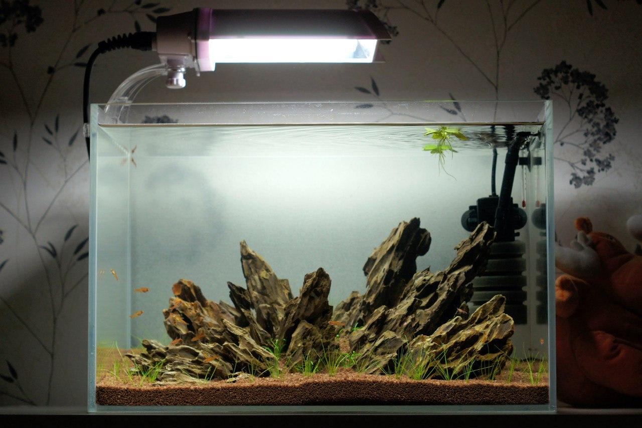 Ваши аквариумы