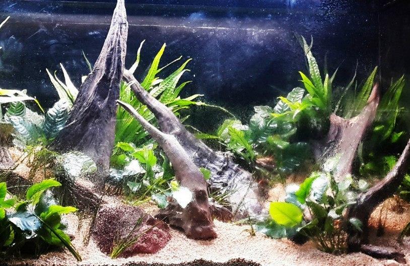 Оформление акваскейпа в Сочи